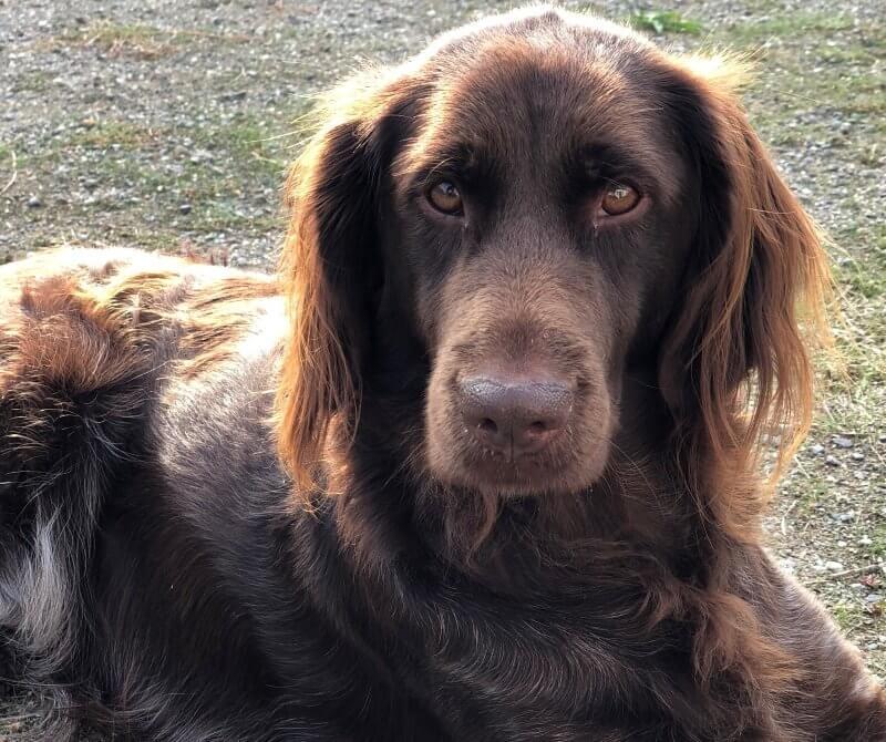 Van Bos en Veld heidewachtel puppies Pippi in de tuin