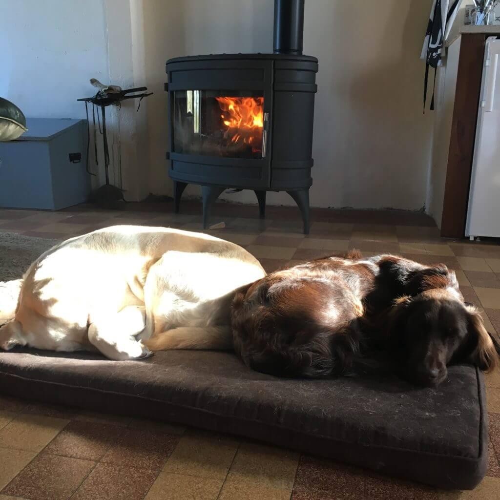 Van Bos en Veld heidewachtel puppies Pippi en Lara