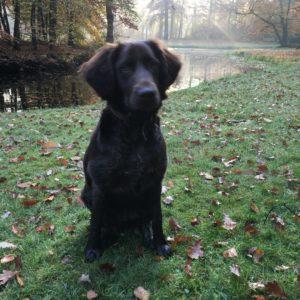 Van Bos en Veld heidewachtel puppies in het bos