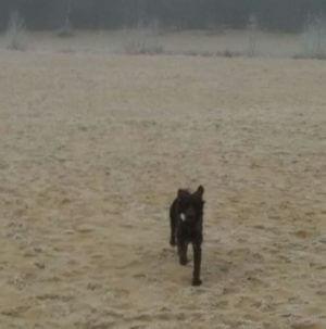 Van Bos en Veld heidewachtel puppies in het veld